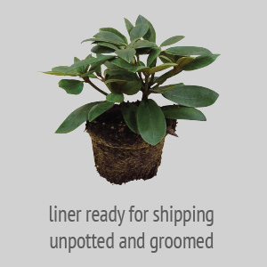 liner read for shipping upotted and groomed